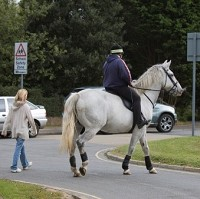 Drivers advised on horse safety