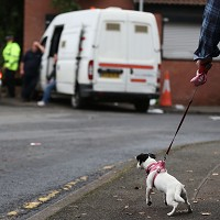 Dogs donations cause M6 gridlock